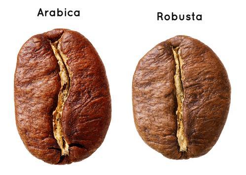 Кофейные зерна арабики и робусты
