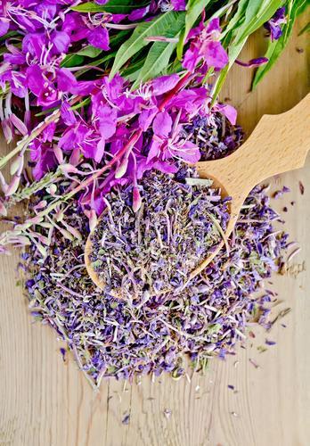 Цветки копорского чая