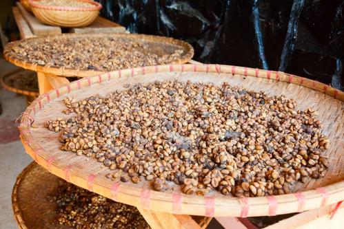 Кофе лювак в зернах
