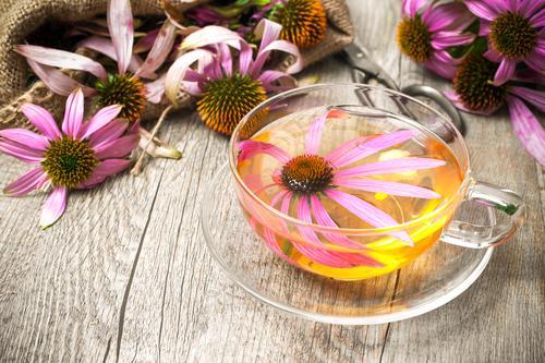 Чашка чая с цветками эхинацеи