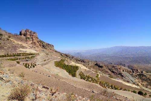 Горные кофейные плантации в деревне в Йемене