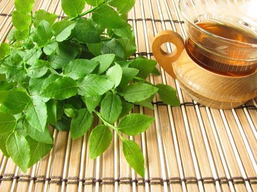 Свежие листья черники и чашка чая