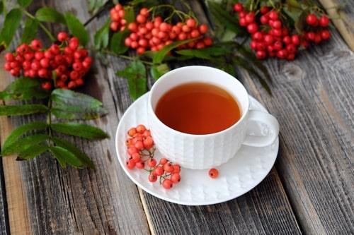 Свежие ягоды рябины для чая