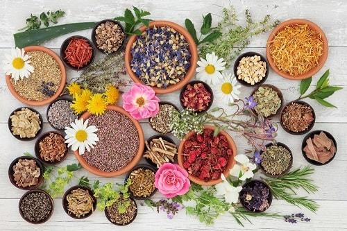 Сушеные лекарственные травы и цветы